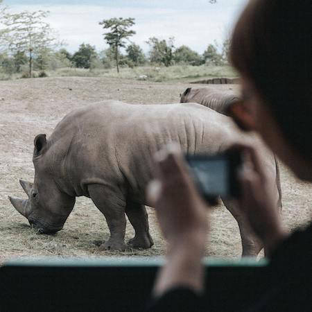 Person taking a photo of a rhino