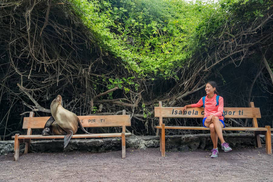 Sealion on a bench in the Galapagos