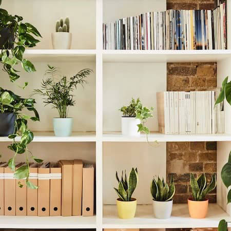 Shelving unit with plants