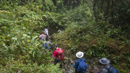 hiking through jungle in colombia