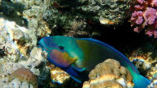 Fish in coral reefs