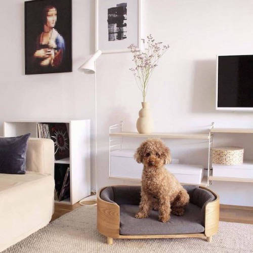 Dog in bright living room