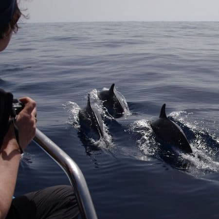 Dolphin watching from boat