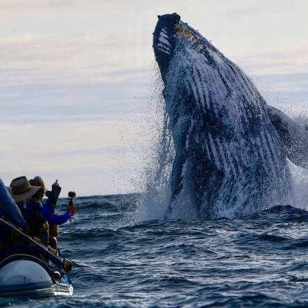 Whale watching on a boat in the Galapagos