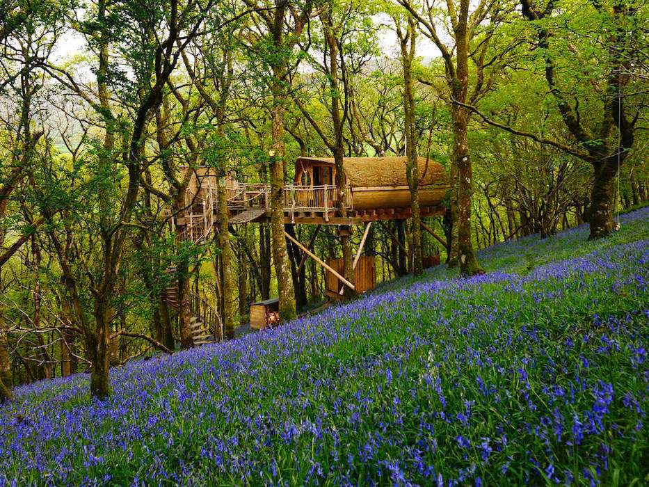 Treehouse in woodland with flowers