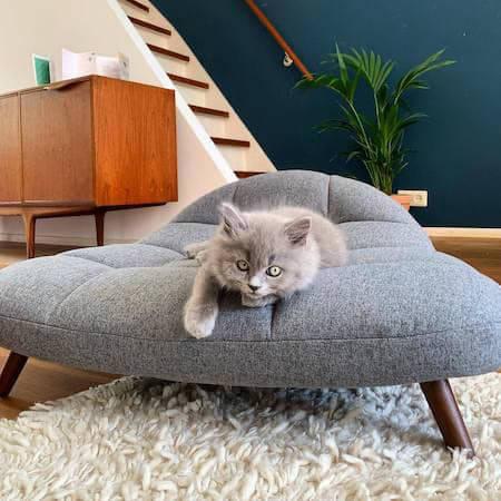 Cat on grey futon