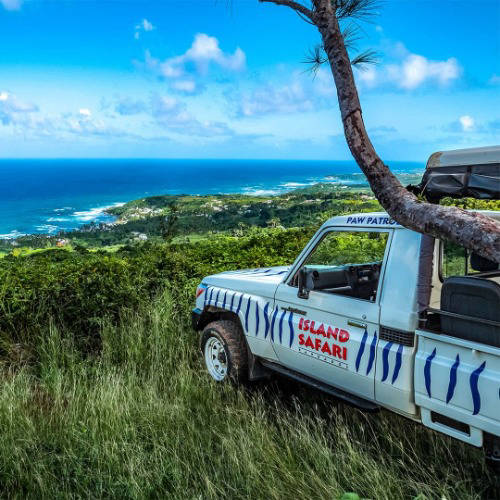 Island safari in the Caribbean