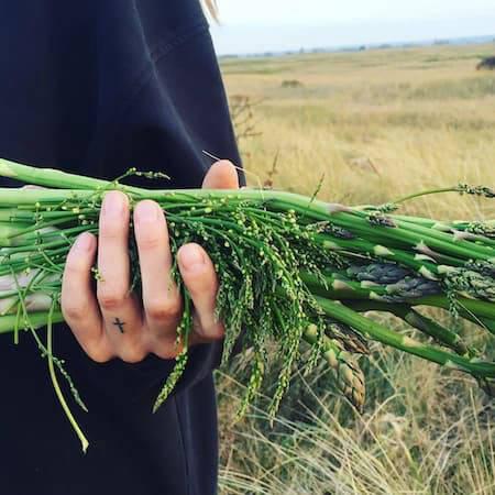 Wild asparagus freshly foraged
