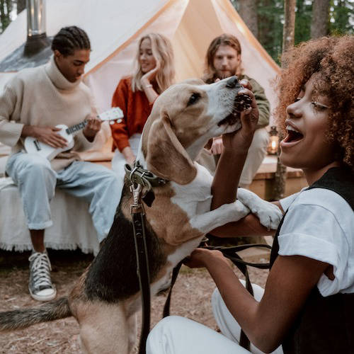 Friends glamping with dog