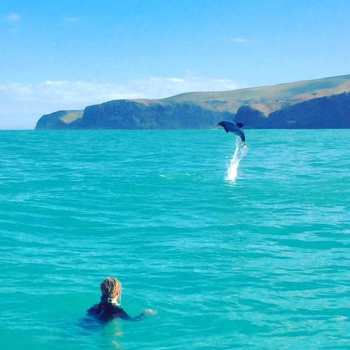 Dolphin jumping out of blue waters